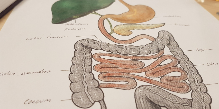 Anatomi, fysiologi og patologi - mandagshold